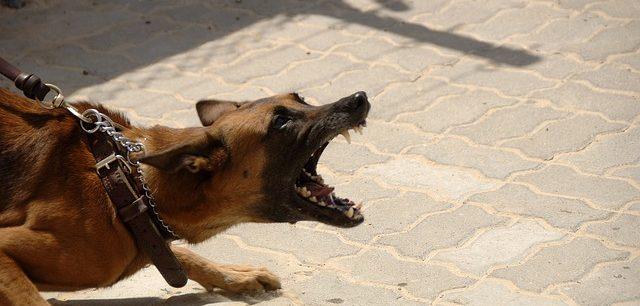 Dog attacks in Summer